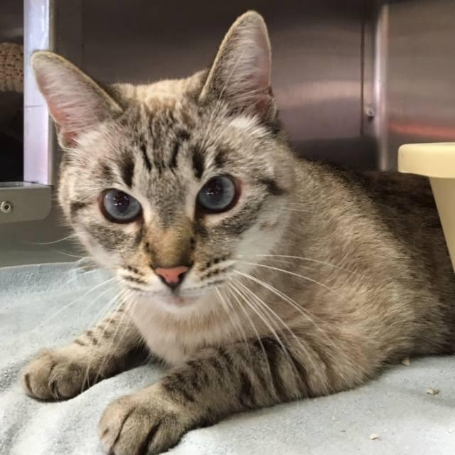 Give Me Shelter Cat Rescue Sf